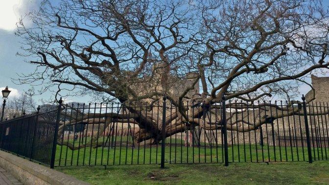 Decorative Vertical Bar Railings round Catalpa Tree Perimeter