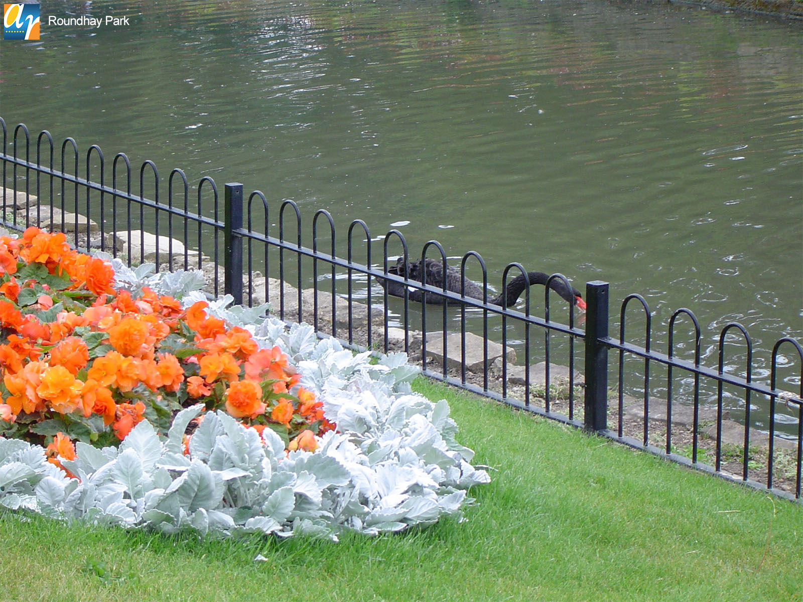 Roundhay Park standard bow top railings